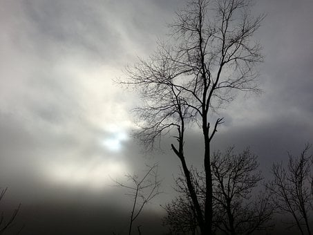 Trees, Woods, Cloudy, Days, Clouds, Darkness