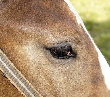 Horse, Foal, Close, Eye, Brown, Beauty