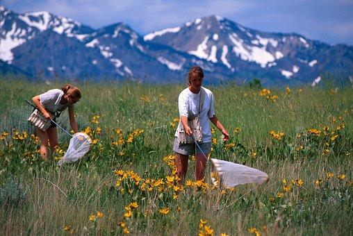 Catching Butterflies, Nets, Hunting, Field, People