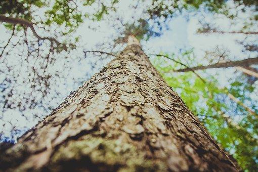 Tree, Bark, Tree Bark, Trunk, Texture, Background