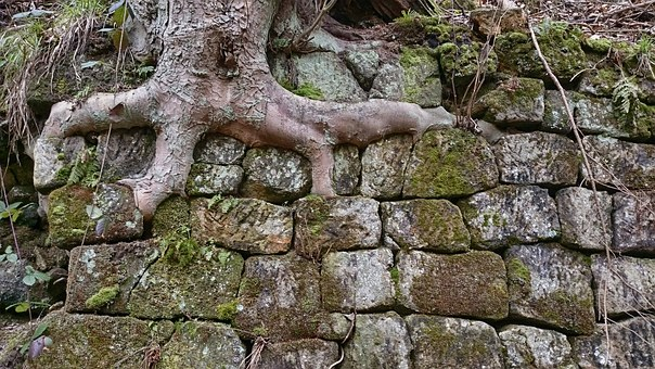 Root, Tree, Tree Root, Forest, Wall, Stones, Rooted
