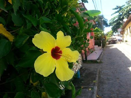 Flower, Street, Boipeba