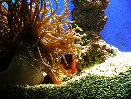 Sea, Aquarium, Plant