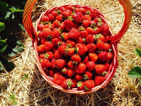 Strawberries, Red, Fruits, Basket, Eat