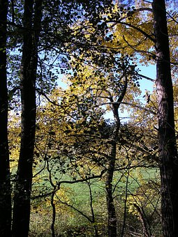 Tree, Trees, Sky, Kahl, Autumn, Branch, Nature