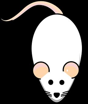 Rat, Mouse, White, Albino, Animal, Mammal, Lab, Biology