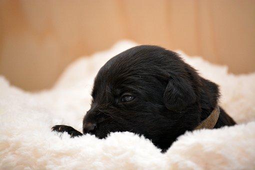 Puppy, Dog, Pet, Animal Portrait, Young Dog, Hybrid