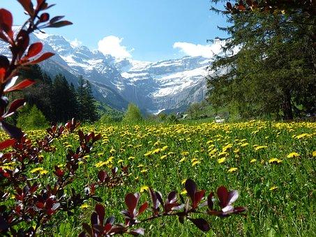 Flower Meadow, Dandelion, Mountain Meadow, Mountains