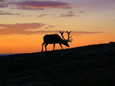 Sunset, Deer, Silhouette, Animal, Nature