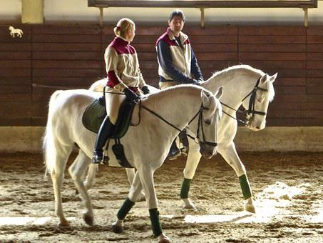 Horses, Pair, Equestrian, Together, Friendship, Equine