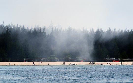 Sea, Ocean, Beach, Forest, Landscape, Coast, Tropical