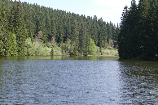 Grumbach Pond, Lake, Water, Forest, Nature, Landscape