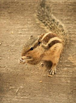 Squirrel, Rodent, Animal, Stripes, Mammal, Fur