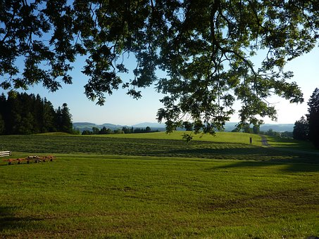 Allgäu, M Farms, Gestratz, Meadow, Pasture, Idyll