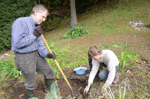 Digging, Potatoes, Garden, Gardening