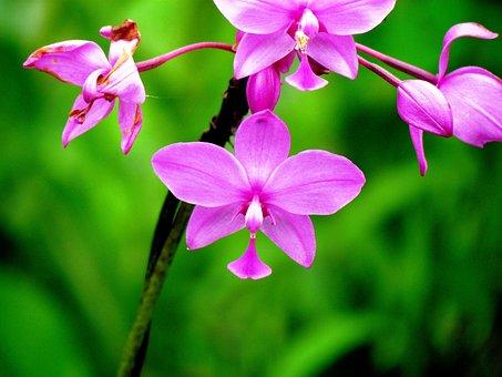 Orchid, Flower, Nature, Flora, Plant, Macro, Flowering