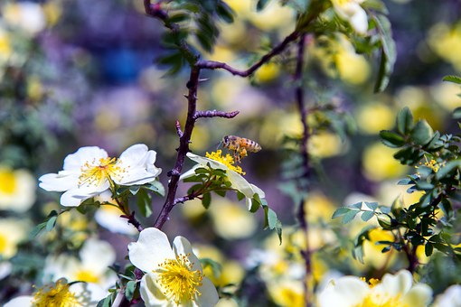 Bee, Pollination, Pollen, Insect, Nature, Flower