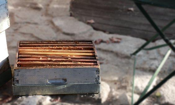 Hive, Bees, Honey, Beekeeping, Nature, Beekeeper