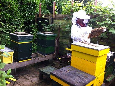 Beekeeper, Bees, Cabinets