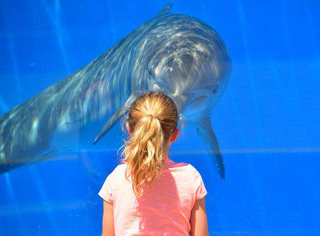 Dolphin, Child, Children, Playing, Interacting, Animal