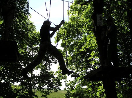 Climbing, Trees, Extreme, Outdoors, Adventure, Guided