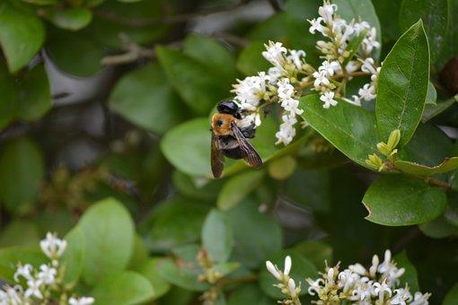 Bee, Flower, Pollen, Insect, Nature, Honey, Garden
