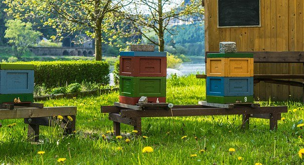 Meadow, Colorful, Color, Spring, Flowers, Bee Box