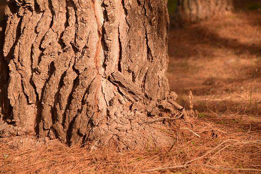 Pine, Log, Forest Floor, Pine Forest, Forest