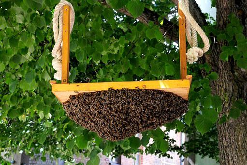 Hive, Bees, Beekeeping, Honey Bees, Insect, Nature