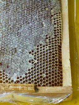 Iran, Honey, Honeycomb, Insect, Honey Production