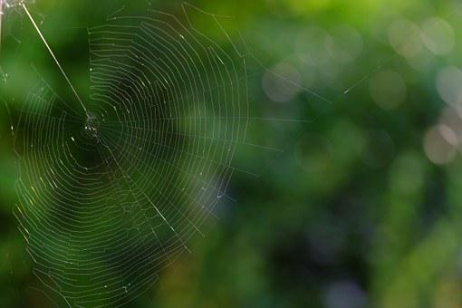 Cobweb, Network, Insect, Nature, Spider, Close, Animals