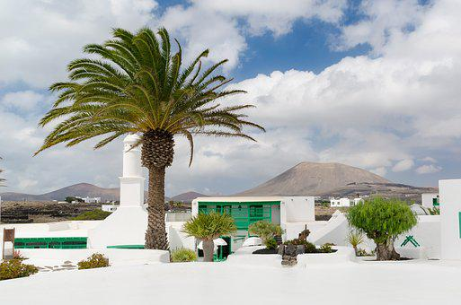 Palm, Lanzarote, Canary Islands, Spain, Island