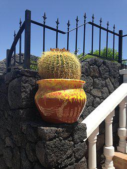 Cactus, Lanzarote, Spain, Plant, Volcanic, Desert