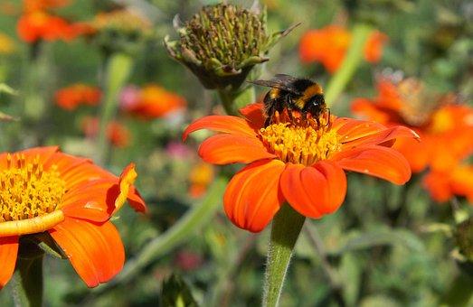 Bee, Flower, Nature, Honey, Insect, Macro, Pollen