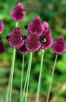 Bees, Flower, Garden, Nature, Honey, Insect, Macro