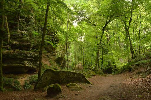 Luxembourg, Echternach, Forest, Rock, Green, Nature