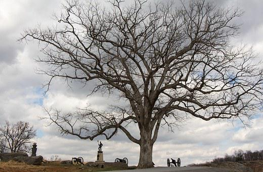 Gettysburg, Pennsylvania, Cannon, Tree, Statue