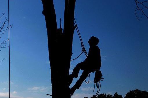 Tree Service, Hard Work, Lumberjack, Tree, Branch
