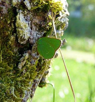 Butterfly, Green Butterfly, Freshman, Green Wings