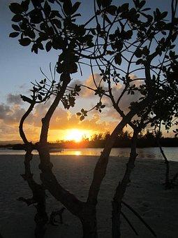 Abendstimmung, Tropical, Jungle, Sea, Idyll, Romantic