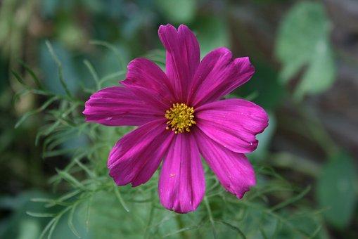 Canavan, Flower, Magarite, Plant, Nature, Flowers