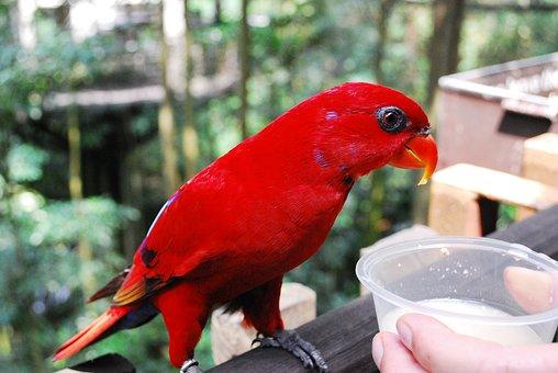 Jurong Bird Park, Bird, Fly, Wings, Feather, Wildlife
