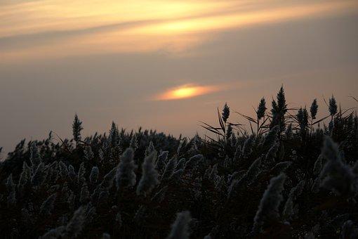 Sunrise, Reed, Kasumi