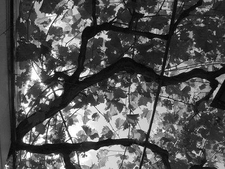 Leaves, Walk, Sun, Enjoy, Warm, Black And White, Plant