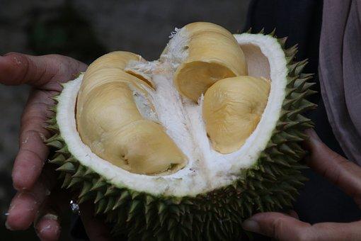 Durian, King Of Fruit, Exotic Fruit