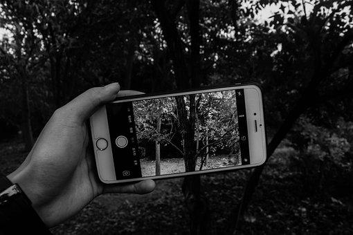 Black And White, Mobile, Picture-in-picture, Forest
