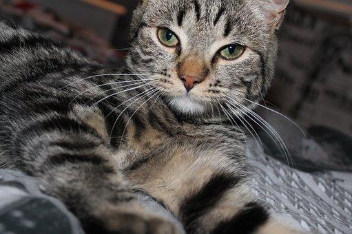 Maja, Kitten, Tired