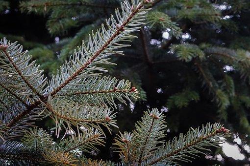 Christmas Market, Tree, Evening, Winter, Lighting