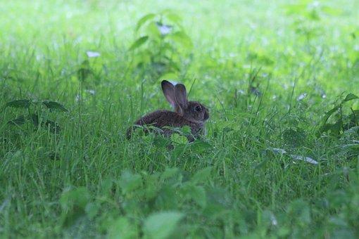 Hare, Nature, Spring, Flower, Summer, Green