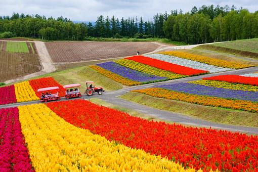 Hokkaido, Plantation, Flower Garden